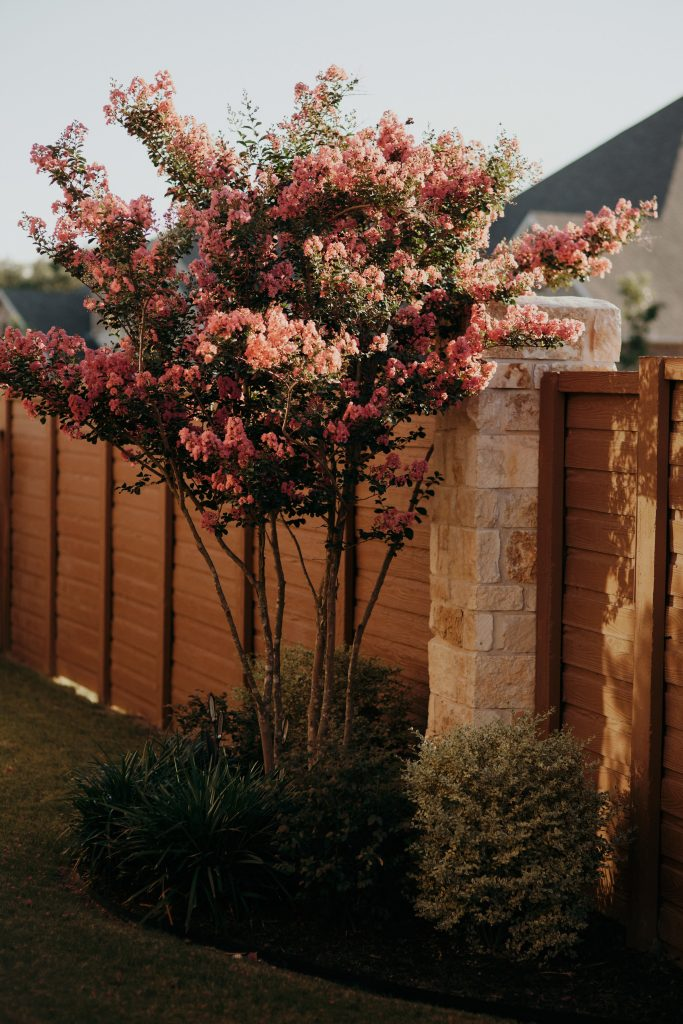 Residential-Landscaping-with-Crape-Myrtle